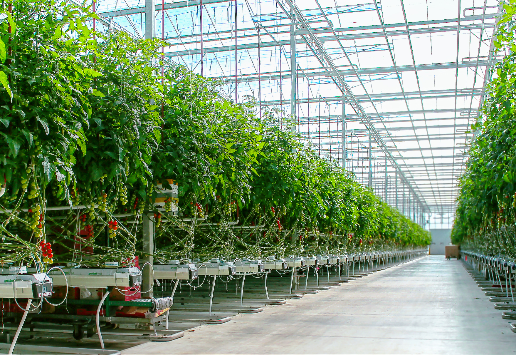 Ontario greenhouse industry sees continued growth